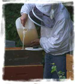 nourrissage des ruches